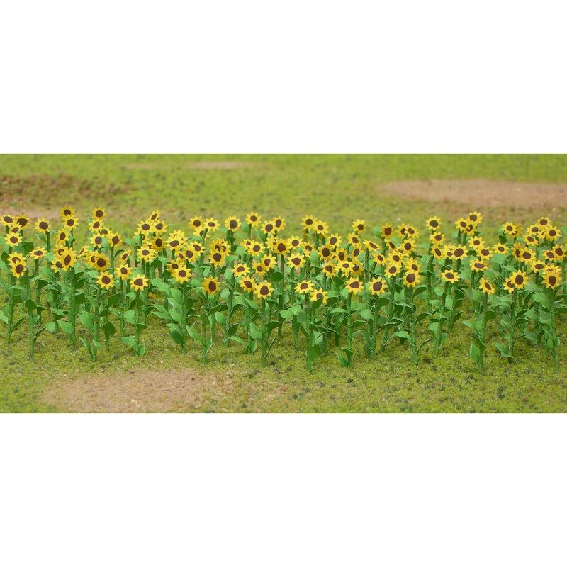"""Sunflowers, 1"""" (16)"""