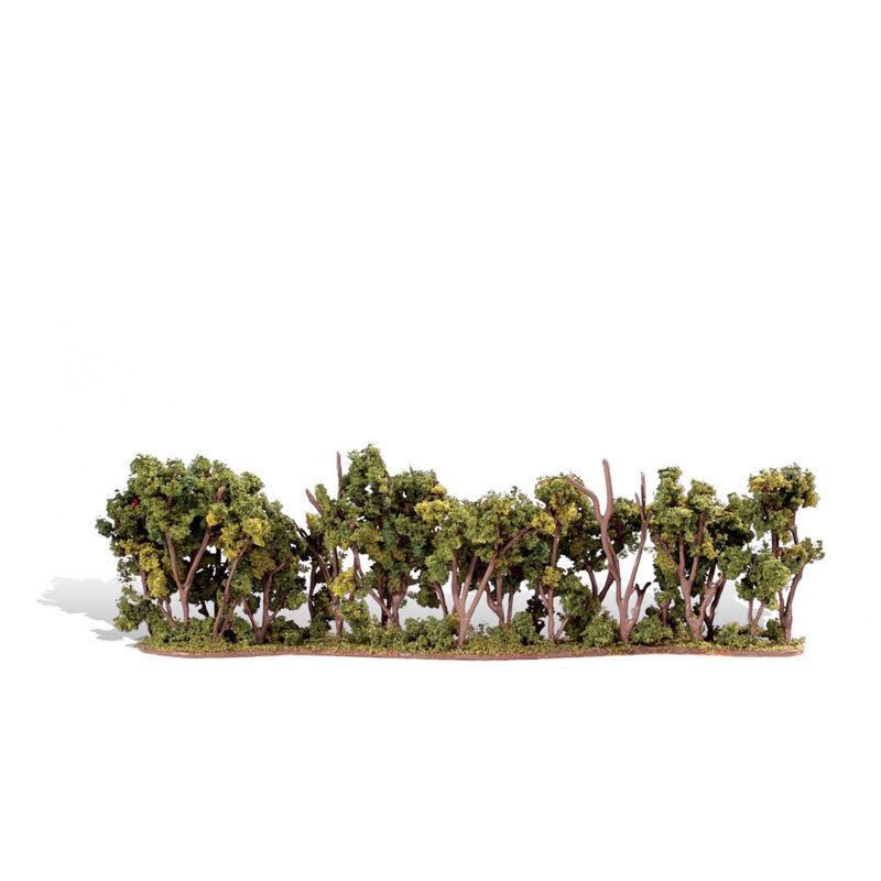 "Classics Tree, Hedge Row 1-2"" (1)"