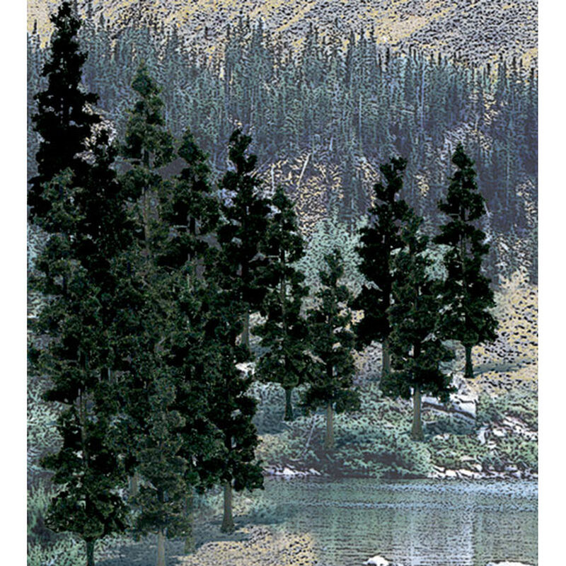 "Value Trees, Conifer 4-6"" (24)"