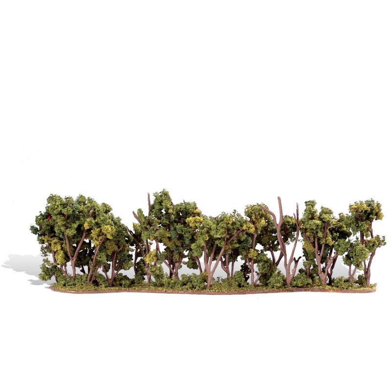 "Classics Tree, Hedge Row 1-4"" (1)"